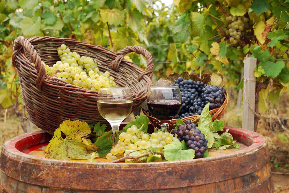 Degustarea-vinului-in-Santorini